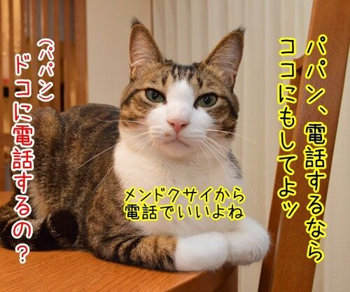 ヤメゴク~ヤクザやめて頂きます~ 猫の写真で4コマ漫画 3コマ目ッ