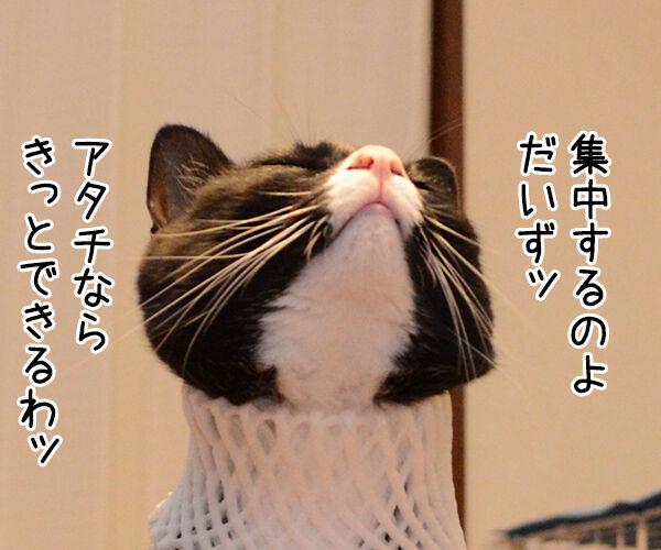 集中ッ 猫の写真で4コマ漫画 1コマ目ッ