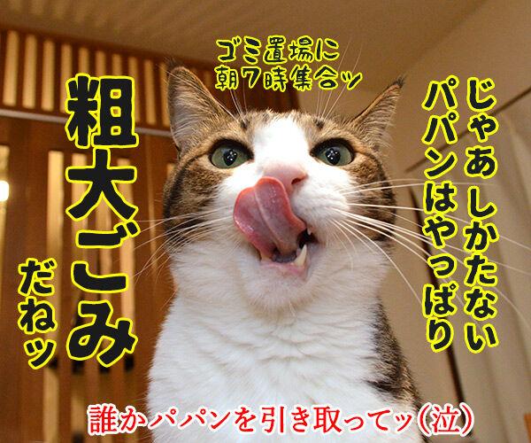 大掃除のついでにいろいろ捨てちゃうわよッ 猫の写真で4コマ漫画 4コマ目ッ
