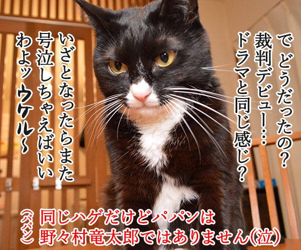 えッ!?パパンが帰ってきた…… 猫の写真で4コマ漫画 4コマ目ッ