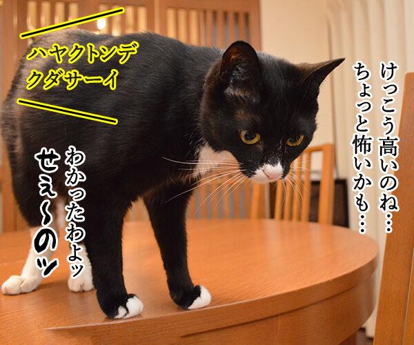 海外旅行でバンジージャンプ 猫の写真で4コマ漫画 2コマ目ッ