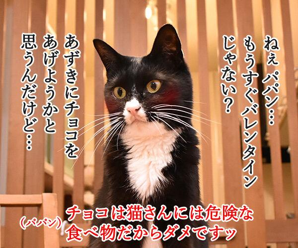 もうすぐバレンタインだから… 猫の写真で4コマ漫画 1コマ目ッ