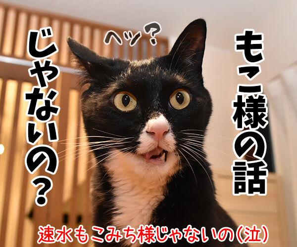 眞子さま ご婚約おめでとうございますッ 猫の写真で4コマ漫画 4コマ目ッ