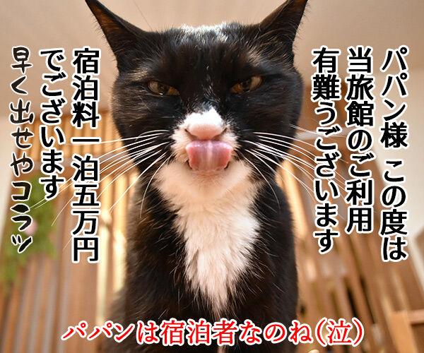 猫カフェの猫さんと泊まれる旅館があるんですってッ 猫の写真で4コマ漫画 4コマ目ッ