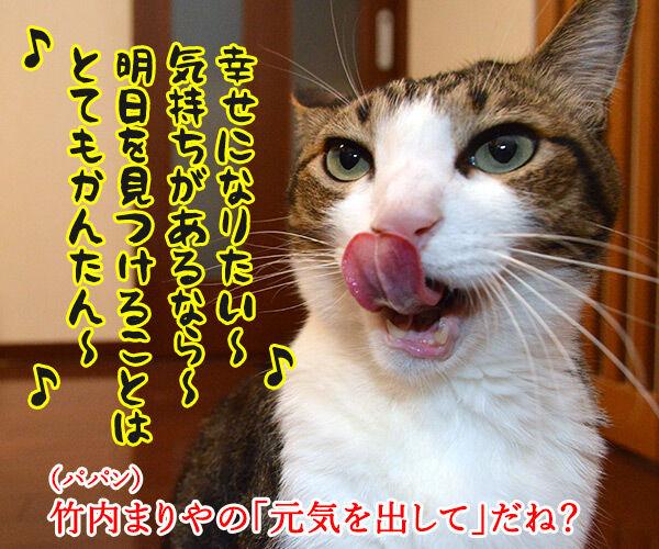 元気を出して(竹内まりや) 猫の写真で4コマ漫画 2コマ目ッ