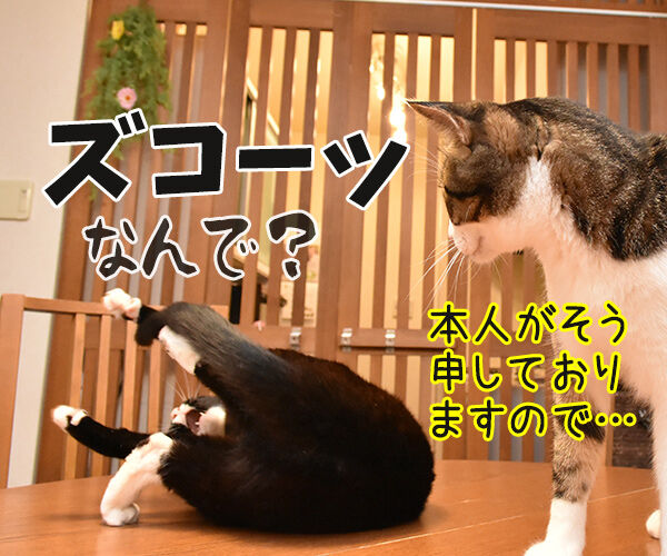 松たか子と前田敦子と沢尻エリカ 猫の写真で4コマ漫画 4コマ目ッ