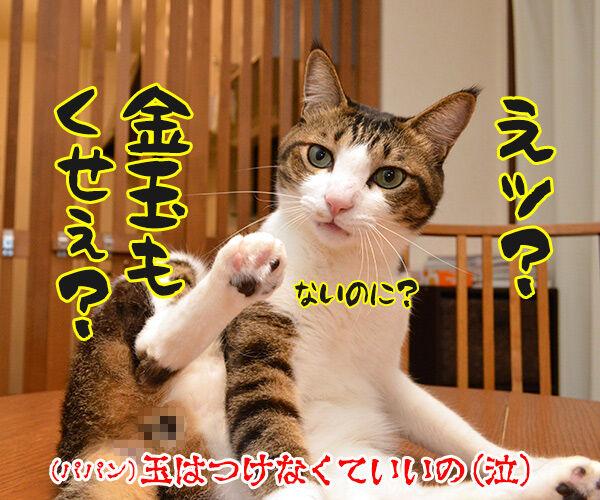 金木犀のいい香りがしてるの 猫の写真で4コマ漫画 4コマ目ッ