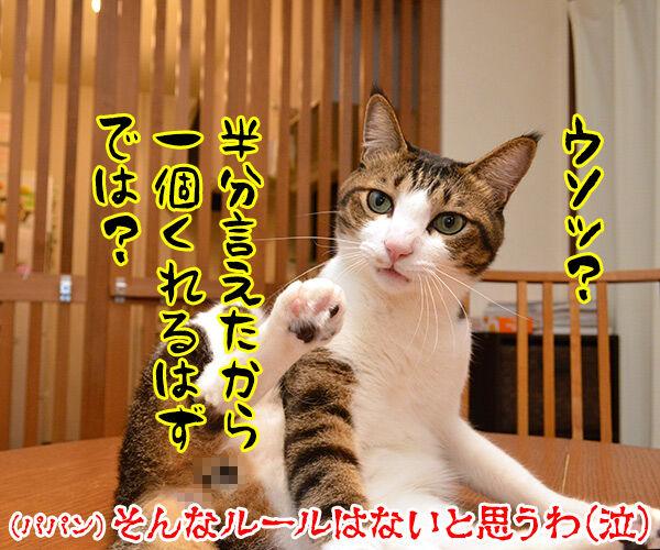 流れ星にお願いをしてみたのッ 猫の写真で4コマ漫画 4コマ目ッ