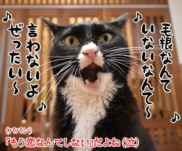 マッキーの曲が配信停止になるのはさみしいのよッ 猫の写真で4コマ漫画 4コマ目ッ
