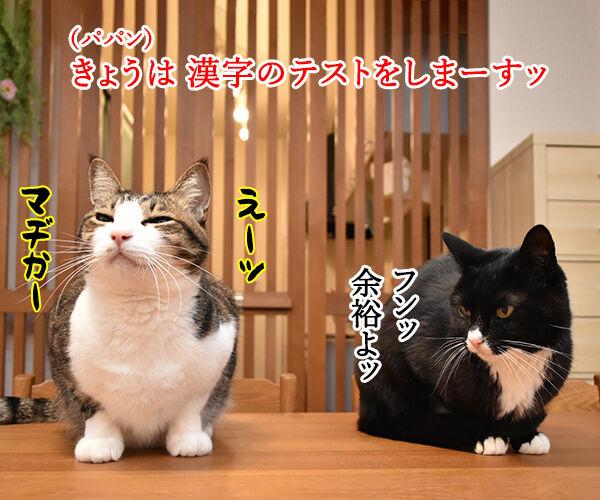 抜き打ちで漢字のテストをするのよッ 猫の写真で4コマ漫画 1コマ目ッ