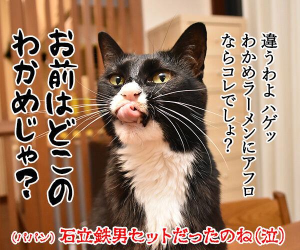 クリスマスプレゼントのお返しは? 猫の写真で4コマ漫画 4コマ目ッ