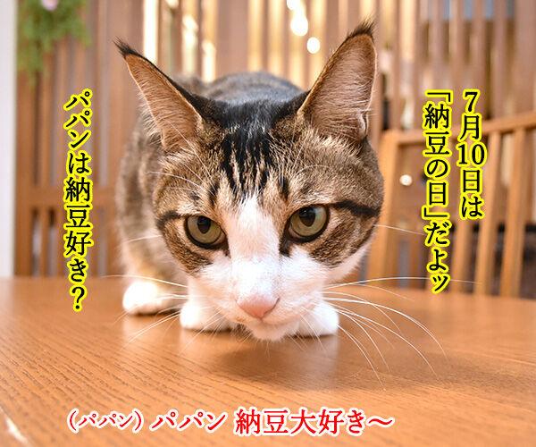 7月10日は『納豆』の日なんですってッ 猫の写真で4コマ漫画 1コマ目ッ