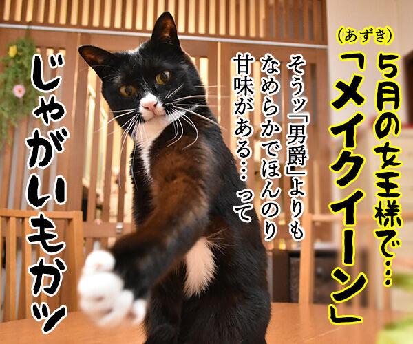 5月1日は何の日かしらッ? 猫の写真で4コマ漫画 4コマ目ッ