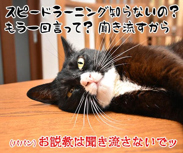 パパンのお説教 猫の写真で4コマ漫画 4コマ目ッ