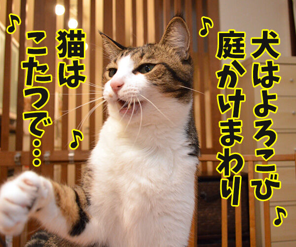 今年こそコタツ買ってくれない? 猫の写真で4コマ漫画 3コマ目ッ