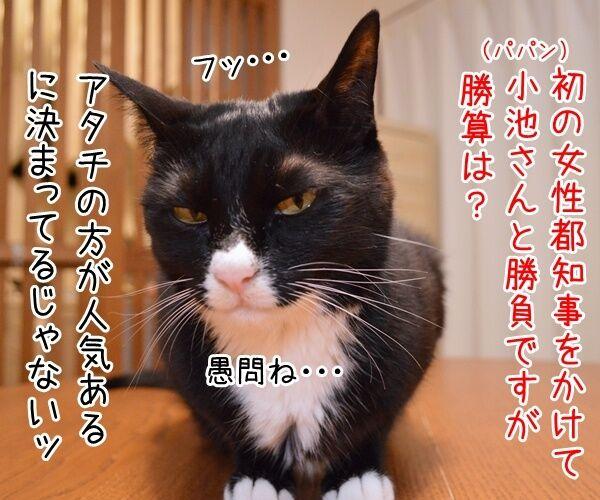 石田純一氏、東京都知事選に出馬断念 猫の写真で4コマ漫画 2コマ目ッ