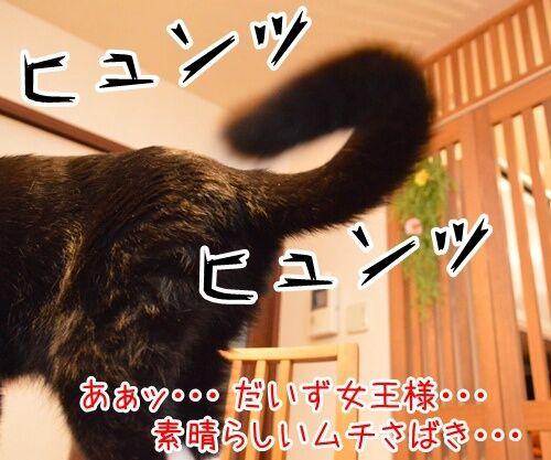 女王様の命令は絶対 猫の写真で4コマ漫画 2コマ目ッ