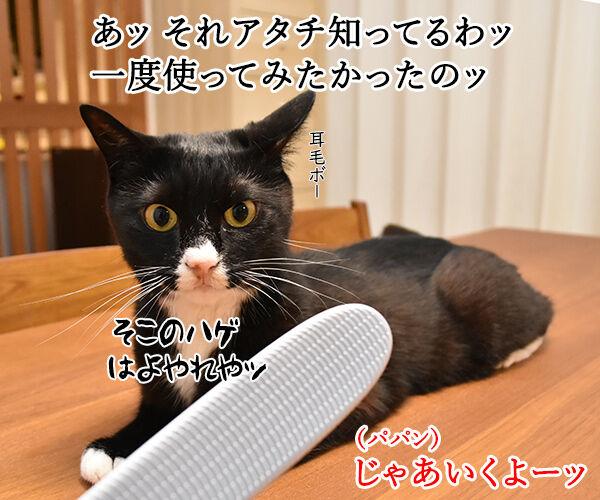猫さんに大人気の『ねこじゃすり』を買ってみたのッ 猫の写真で4コマ漫画 2コマ目ッ