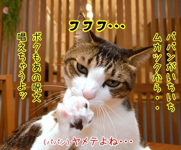 ボクもあの呪文を唱えちゃうよ? 猫の写真で4コマ漫画 1コマ目ッ