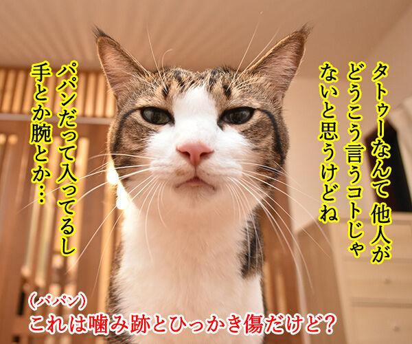 りゅうちぇるのタトゥーに賛否両論なのよッ 猫の写真で4コマ漫画 2コマ目ッ