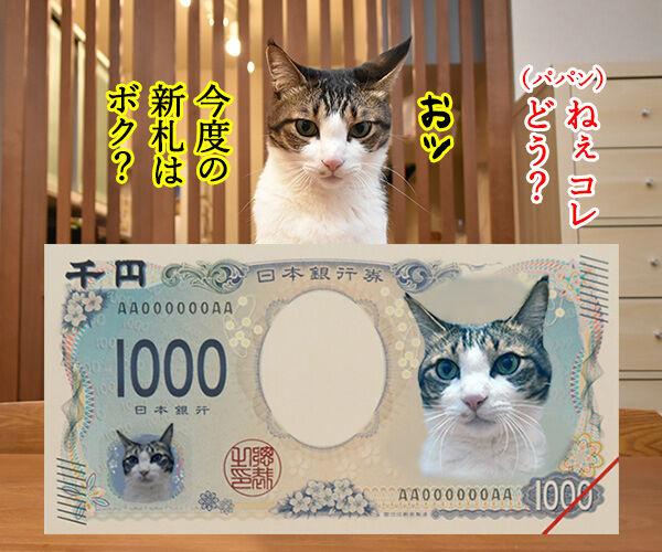 次はボクの新札だね… 猫の写真で4コマ漫画 1コマ目ッ