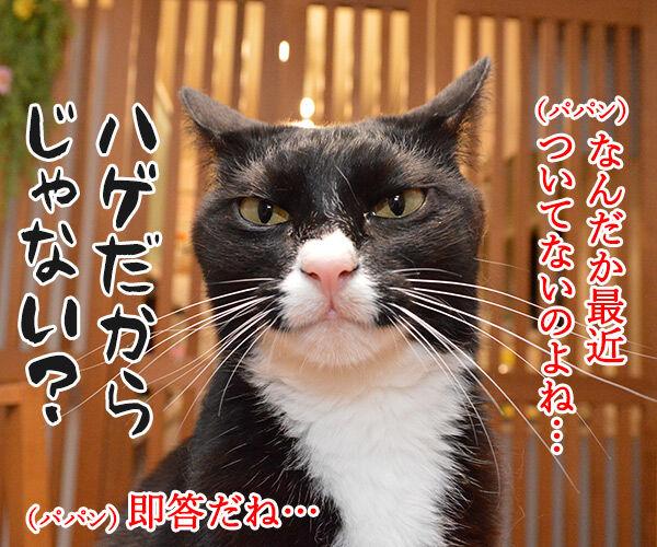 最近ついてないのよね… 猫の写真で4コマ漫画 1コマ目ッ