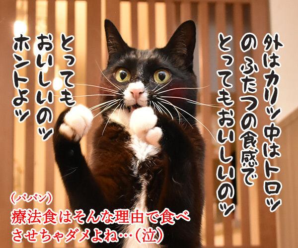 猫さんに多い病気は慢性腎臓病(腎不全)なのよッ 猫の写真で4コマ漫画 4コマ目ッ