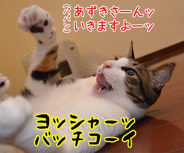 ねこと遊ぶということ 猫の写真で4コマ漫画 1コマ目ッ