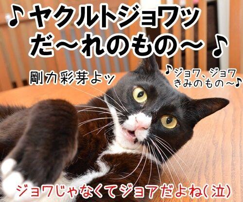 たいくつだからモノマネするわよッ 猫の写真で4コマ漫画 4コマ目ッ