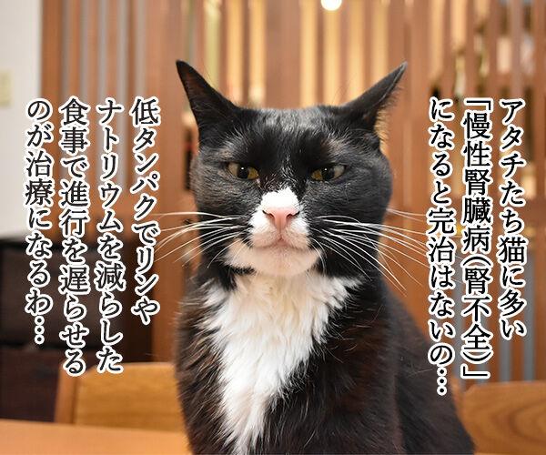 猫さんに多い病気は慢性腎臓病(腎不全)なのよッ 猫の写真で4コマ漫画 1コマ目ッ