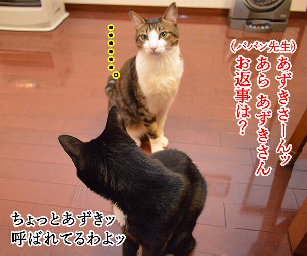 出席とりますッ 猫の写真で4コマ漫画 3コマ目ッ