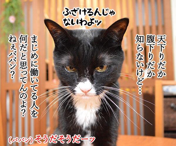 文科省の天下りは『月2回勤務』で『年収1千万円』なのッ 猫の写真で4コマ漫画 3コマ目ッ