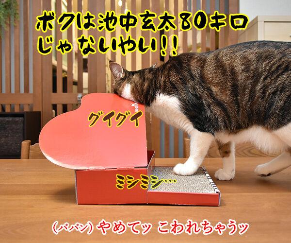 ねこのきもちの付録は『カリカリ 爪とぎ ねこピアノ』なのッ 猫の写真で4コマ漫画 3コマ目ッ