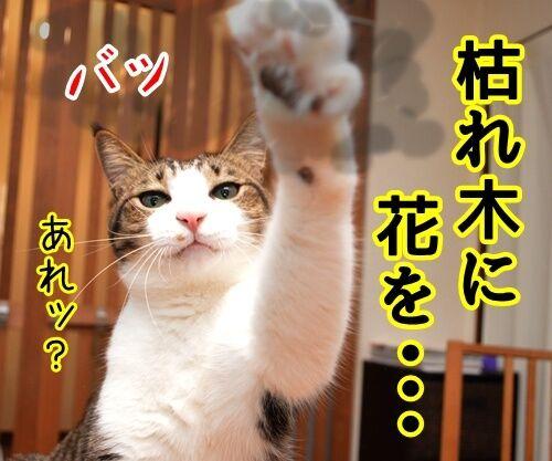 にほん昔話「花さかじいさん」 猫の写真で4コマ漫画 2コマ目ッ