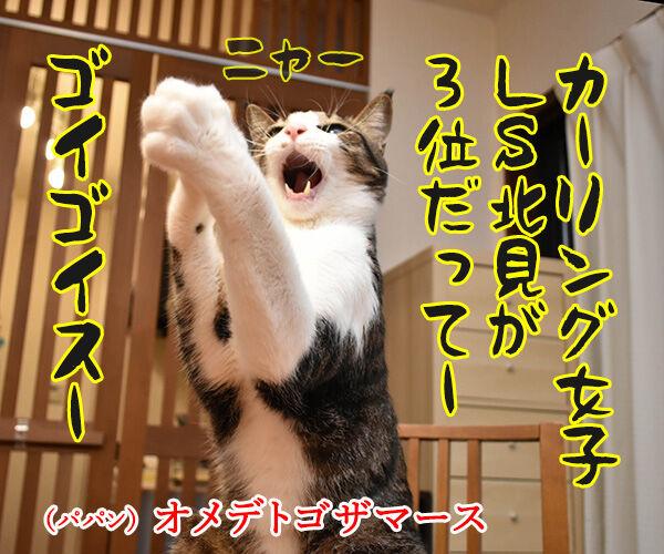 カーリング女子がメダル獲得なのッ 猫の写真で4コマ漫画 1コマ目ッ
