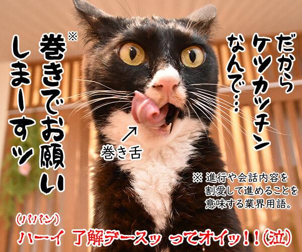 パパンにお説教されてるけど… 猫の写真で4コマ漫画 4コマ目ッ
