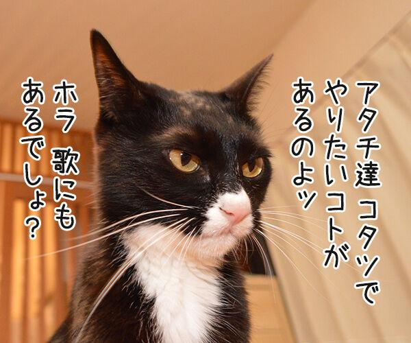 今年こそコタツ買ってくれない? 猫の写真で4コマ漫画 2コマ目ッ