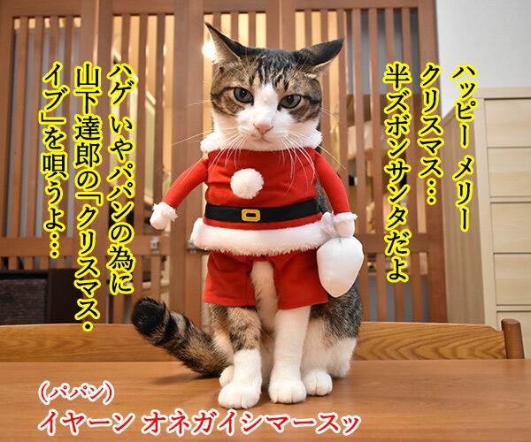 メリークリスマスだからパパンのために唄うのよッ 猫の写真で4コマ漫画 1コマ目ッ