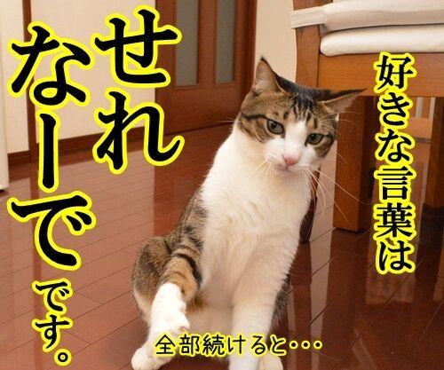好きな言葉は情熱です。 猫の写真で4コマ漫画 3コマ目ッ