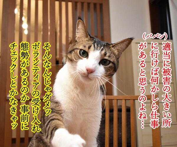 豪雨災害のボランティアに行こうかしら? 猫の写真で4コマ漫画 2コマ目ッ
