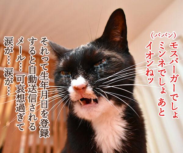 昨日はパパンのお誕生日だったのよッ 猫の写真で4コマ漫画 4コマ目ッ