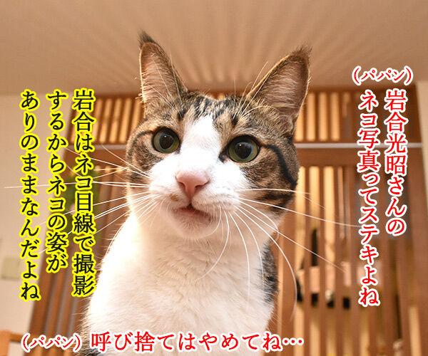 『劇場版 岩合光昭の世界ネコ歩き』は本日公開なのッ 猫の写真で4コマ漫画 1コマ目ッ