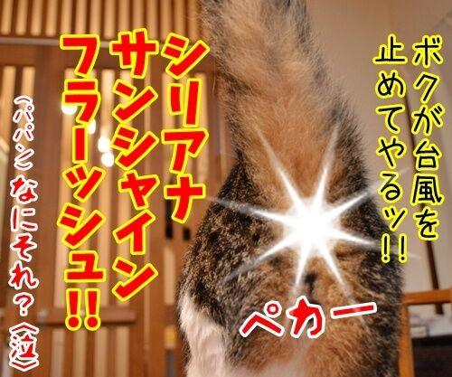 台風が来てるけど 猫の写真で4コマ漫画 3コマ目ッ