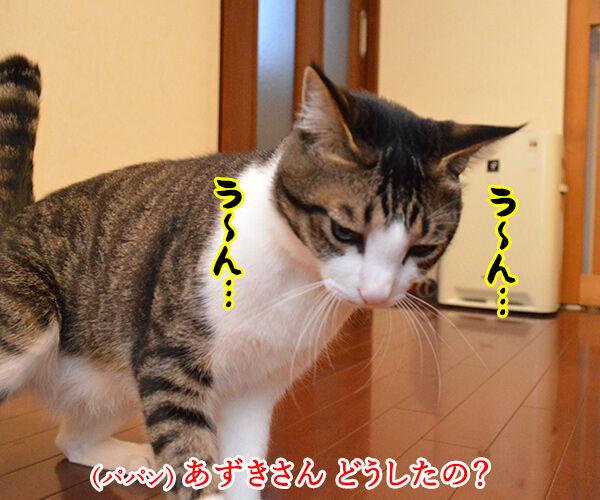 背筋がゾクゾクするのはカゼかしら? 猫の写真で4コマ漫画 1コマ目ッ