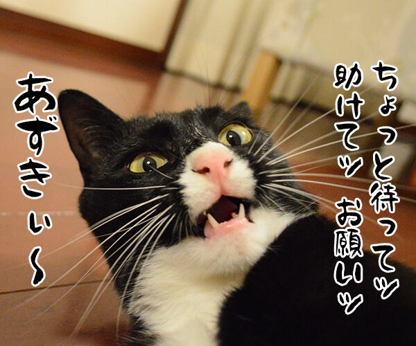もうダメみたい… 猫の写真で4コマ漫画 4コマ目ッ