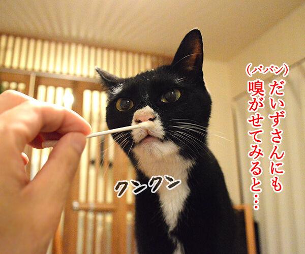 ちょっと実験してみたの 猫の写真で4コマ漫画 3コマ目ッ