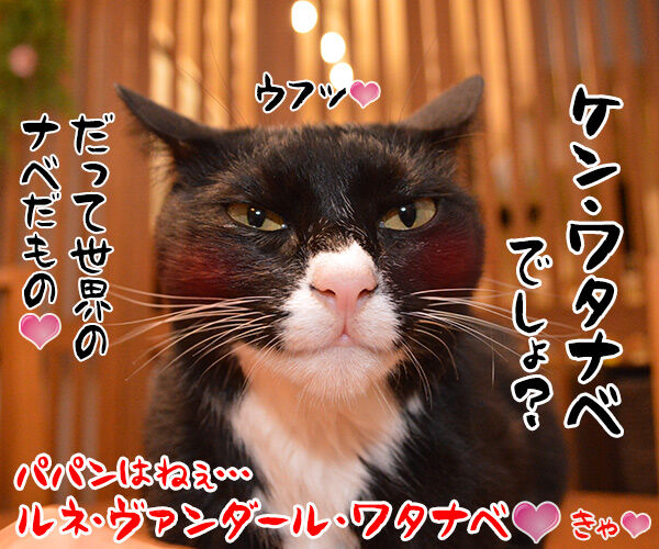 きょうは『鍋の日』なんですってッ 猫の写真で4コマ漫画 4コマ目ッ