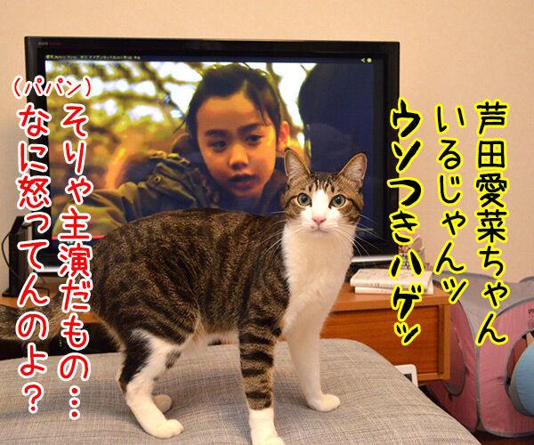 明日、ママがいない? 其の一 猫の写真で4コマ漫画 3コマ目ッ
