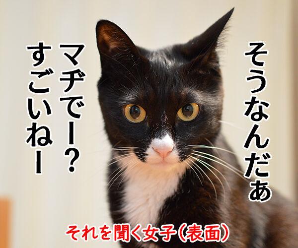 自慢する男子とそれを聞く女子 猫の写真で4コマ漫画 2コマ目ッ
