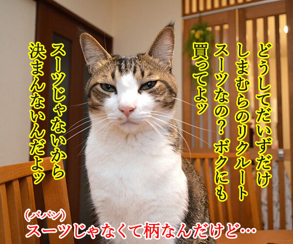 就職活動に必要なもの 猫の写真で4コマ漫画 3コマ目ッ